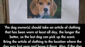 The Simple Way To Find A Lost Dog