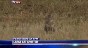 """This Video Of A News Network Reporting On A """"Cougar"""" Is Absolutely Hilarious"""
