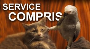 Polite French Animals – Video
