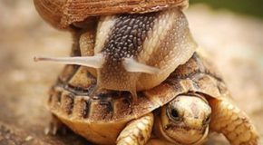 Image tagged in memes,animals,powermetalhead,funny,turtles,snail