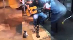 Busker Performs To Group Of Kittens In Malaysia – Video