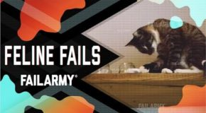 Feline Fails of the Month – Video