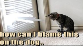 14 Times Cats Tried To Blame Everything On The Dog (Memes)