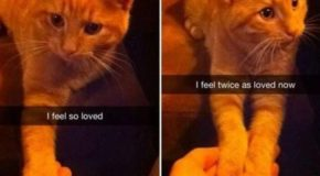 14 Truly Wholesome Cat Snapchats For Your AWW Pleasure